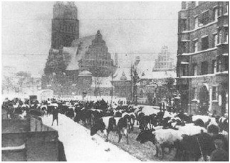 Winter chaos in the streets of Breslau in 1945 Cows and people trying to flee west.